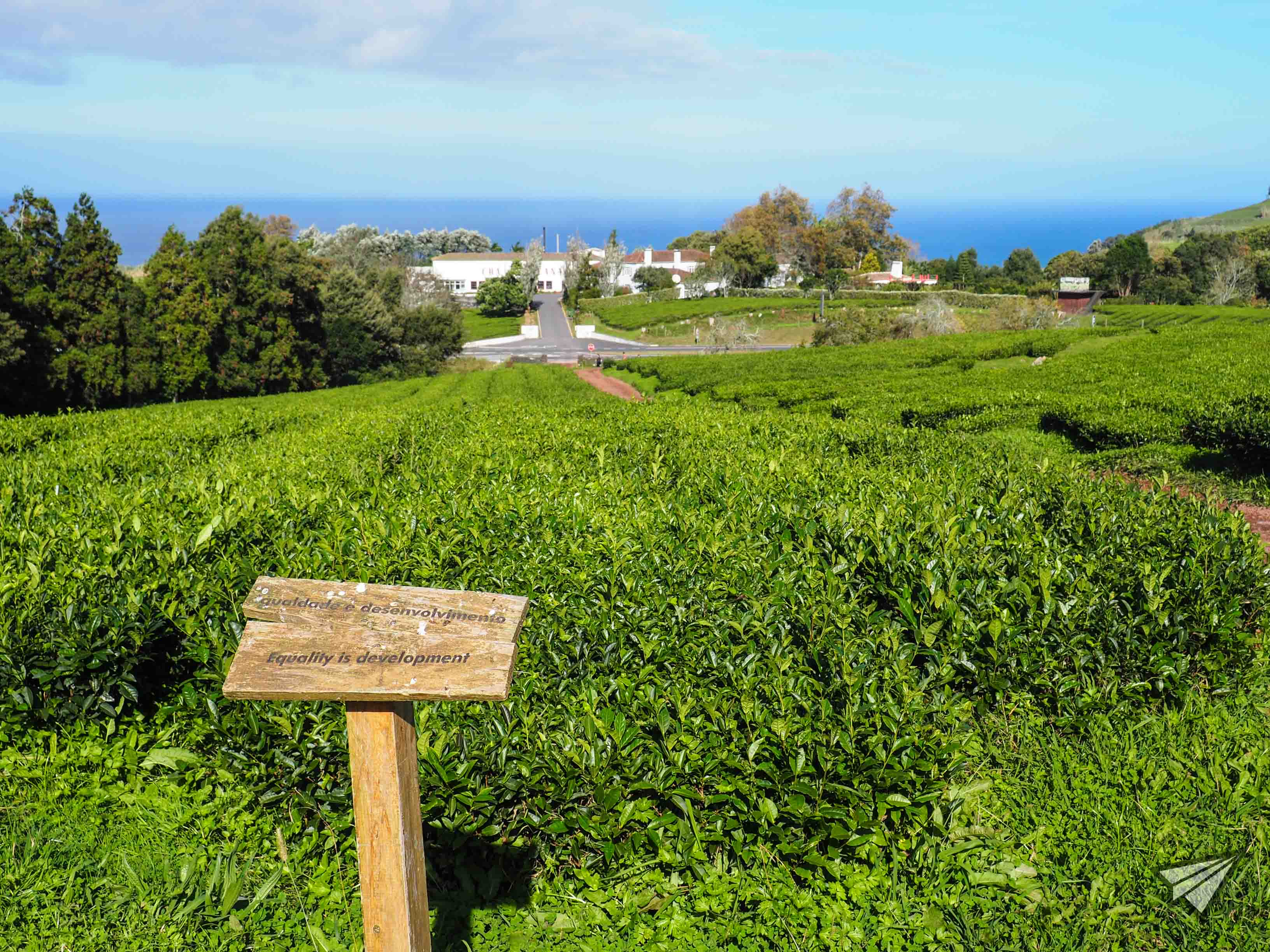 Gorreana Tea Factory panorama