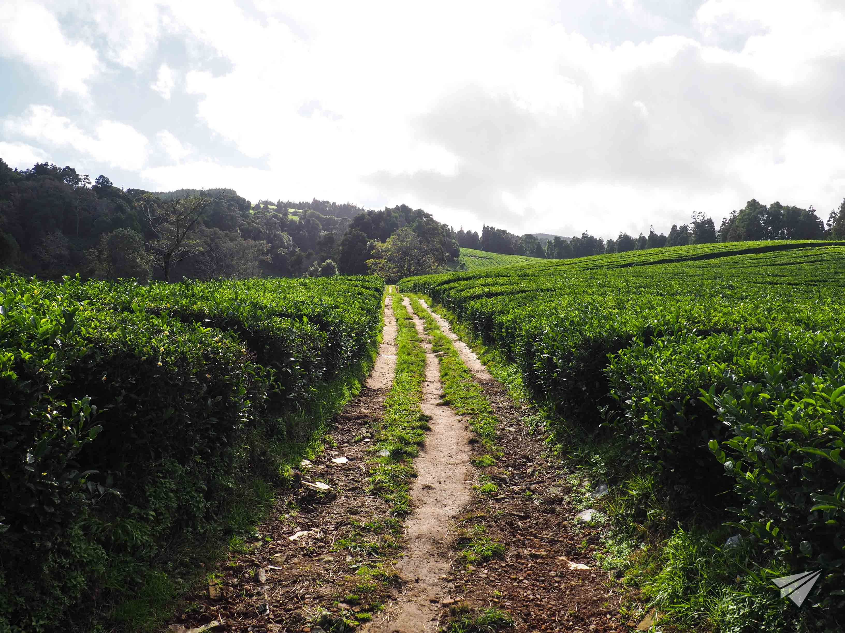 Gorreana Tea Factory path