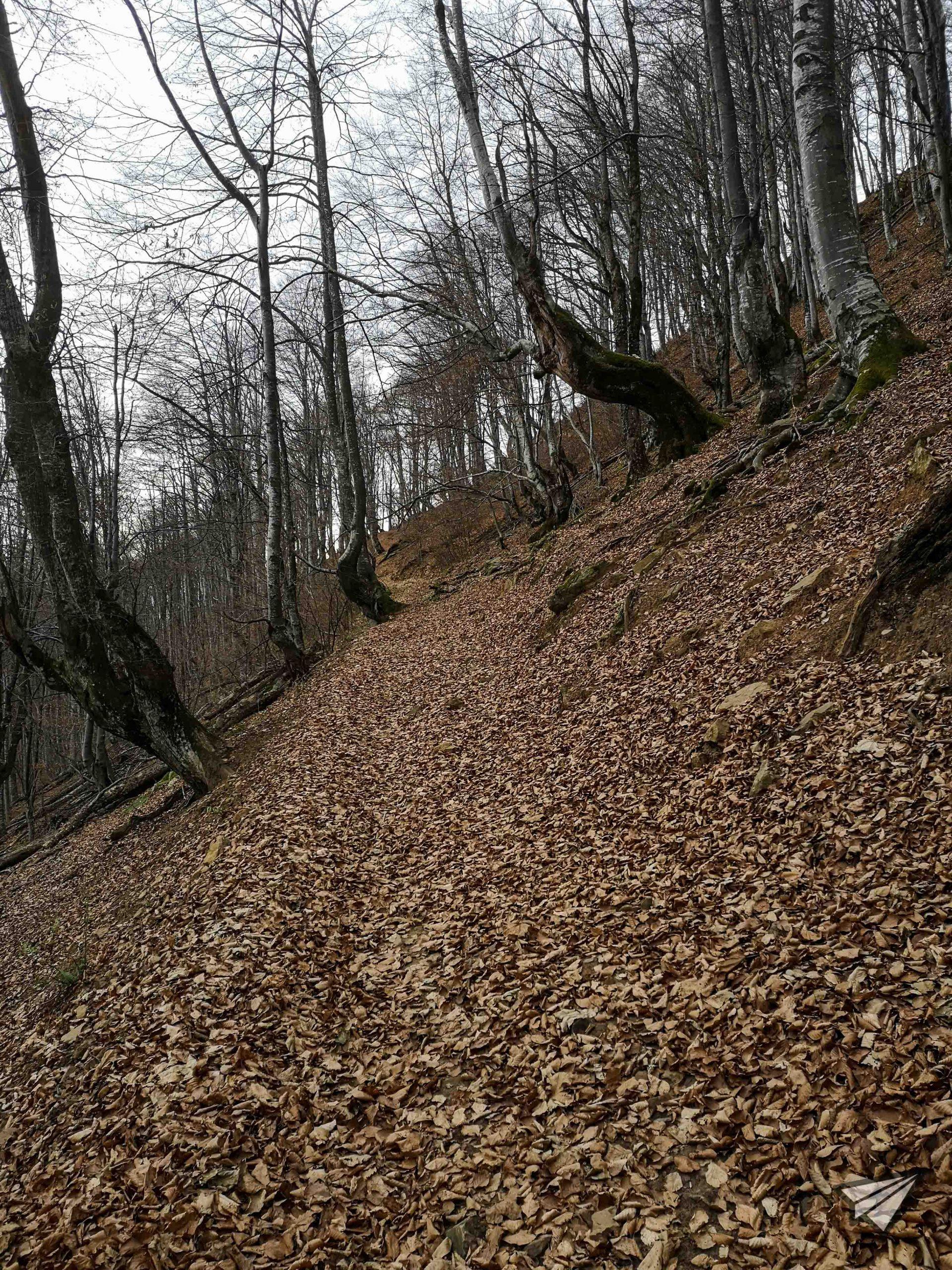 """гора """"Нагоре към слънцето"""""""