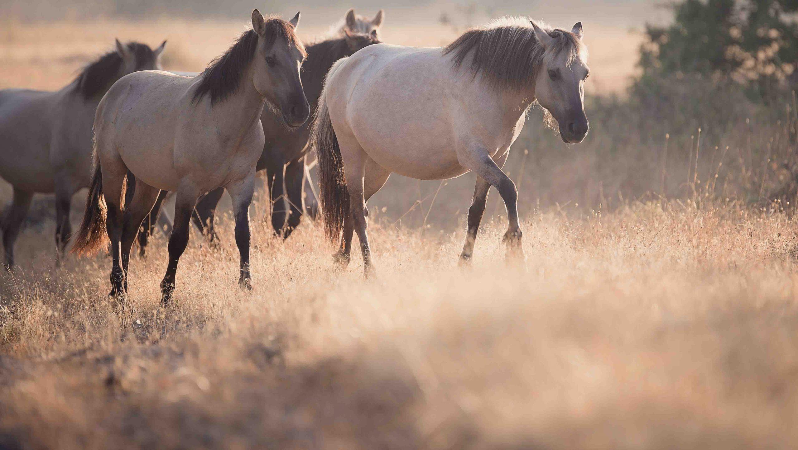 Богдан Боев_диви коне
